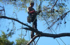 Sébéflo élagage – Élagage, abattage, débroussaillage, travaux forestier, entretien jardins